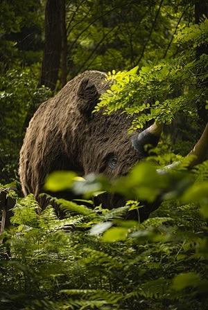 Dinopark Freilichtpark Münchenhagen