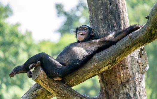 Serengeti-park Tier- und Freizeitpark Niedersachsen
