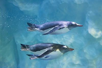 Sea Life Pinguine
