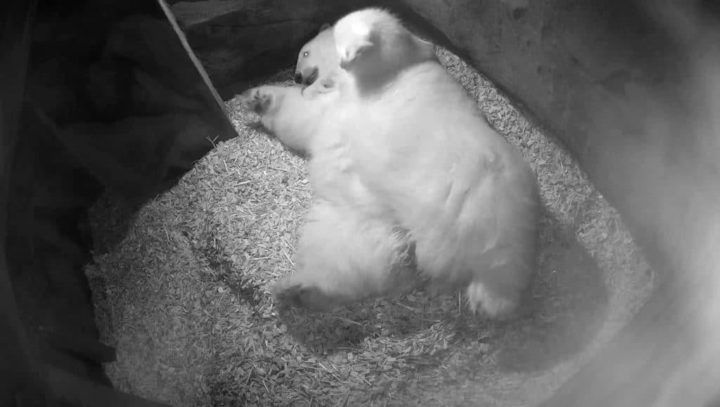 Milana und ihr Nachwuchs Erlebnis Zoo Hannover