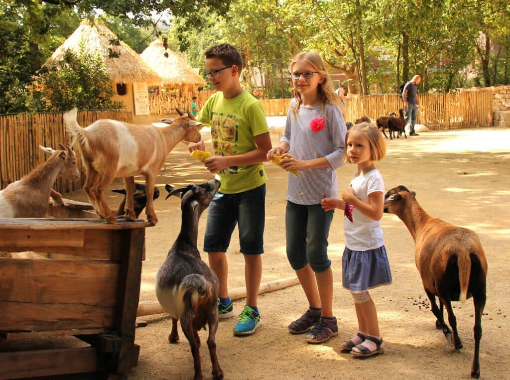 zoo-hannover-presse-1500xx-streichelwiese-sambesi-kraal-kinder-ziegen-erlebnis-zoo-hannover