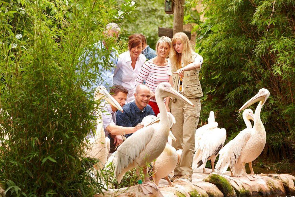 zoo-hannover-presse-sambesi-pelikananlage-erlebniszoo-hannover
