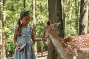 Mädchen füttert Tiere im Wildparadies Tripsdrill