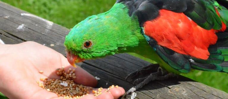 Affen- & Vogelpark Eckenhagen Vogel füttern