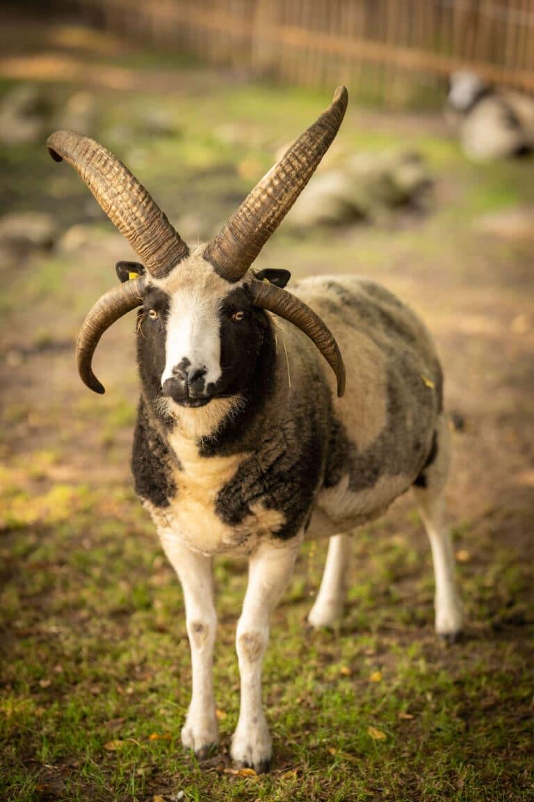 Tiere im Serengeti-Park Hodenhagen
