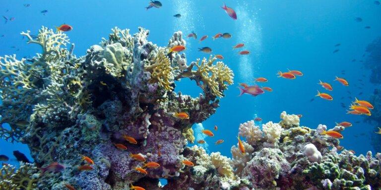 coral reefs 1920x1280 1