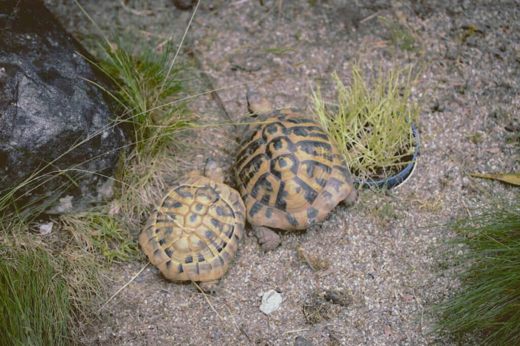 fpe schwarzwaldzoo Waldkirch Schildkröten