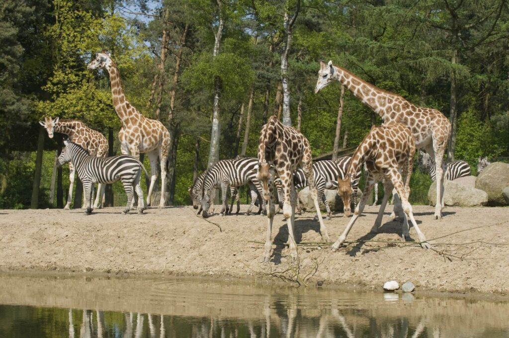 Burgers' Zoo verlängert die Sommertage PM