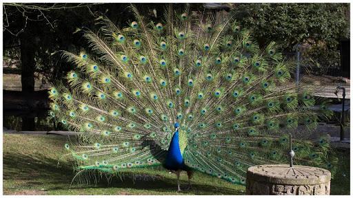 Tierpark Fauna
