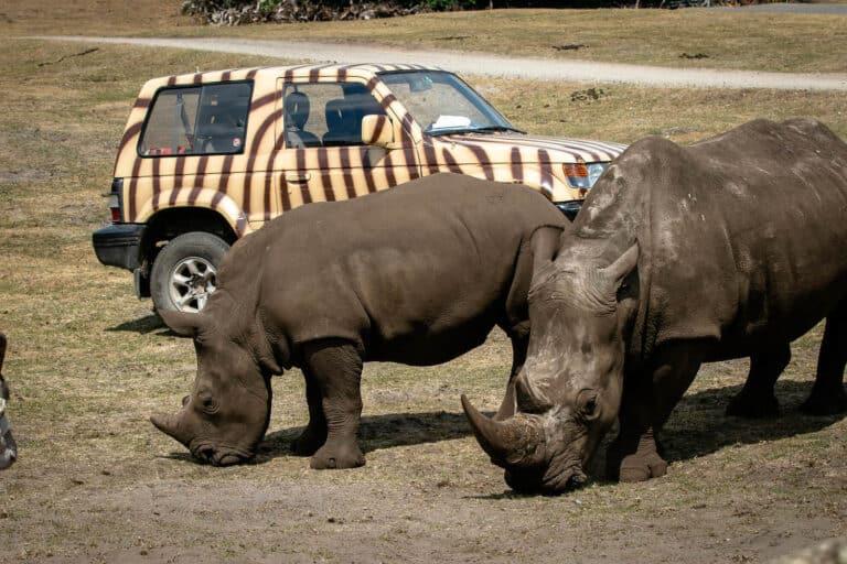 Serengeti Park Hodenhagen Gehege