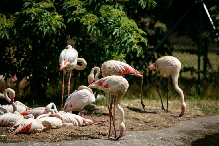 Serengeti Park Hodenhagen Flamingo