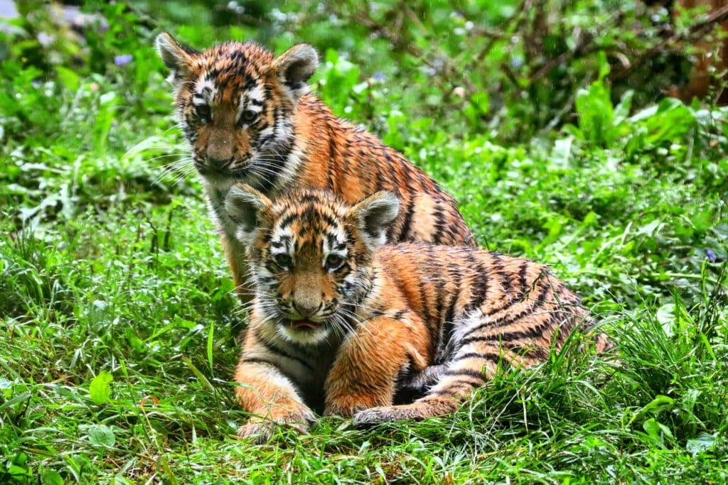 Foto: Zoo Duisburg / R. Jodgalweit